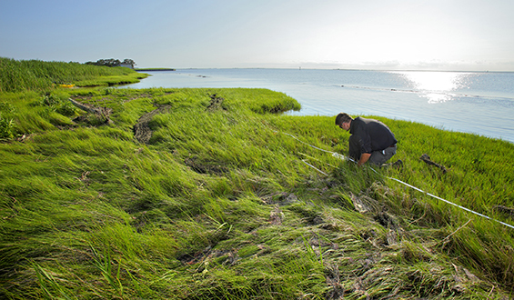 Misericordia student research fellow tackles shoreline issues